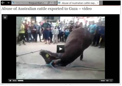 Gaza cattle abuse
